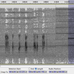 An example spectrogram of the voice and a sonar ping