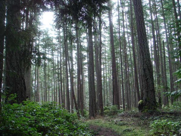 temperate coniferous forest