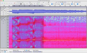 Spectrogram of a single ping on the Orcasound hydrophone at 10:55 a.m.
